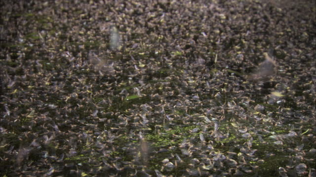 thousands of mayflies swarm and cover a river. - 虫の群れ点の映像素材/bロール