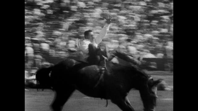 thousands of people crowded into bleachers / cowboy falls off bucking horse / another cowboy manages to stay on horse / bull rider thrown over fence... - 1953 stock videos and b-roll footage