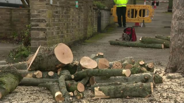 thousands of trees in sheffield set to be cut down by council thousands of trees in sheffield set to be cut down by council sheffield sawn up tree... - sheffield stock videos and b-roll footage