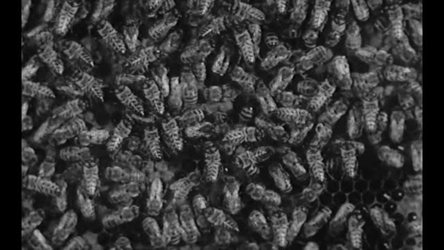 1959 cu of thousands of wasps buzzing together - buzzing stock videos & royalty-free footage