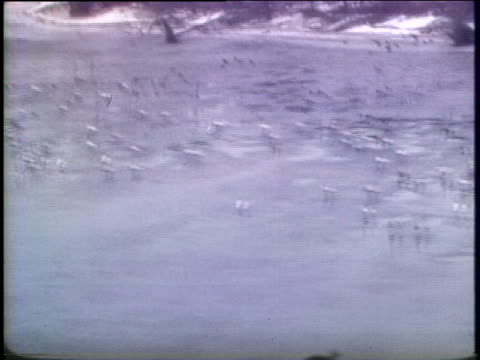 thousands of waterfowl along the delaware river suffer the effects of a tanker oil spill in pennsylvania in 1976 - デラウェア川点の映像素材/bロール