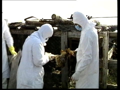 vídeos de stock e filmes b-roll de pressure for emergency measures to protect uk poultry tx russia ural mountains chelyabinsk ext sanitary workers in white and wearing face masks give... - vírus da gripe aviária