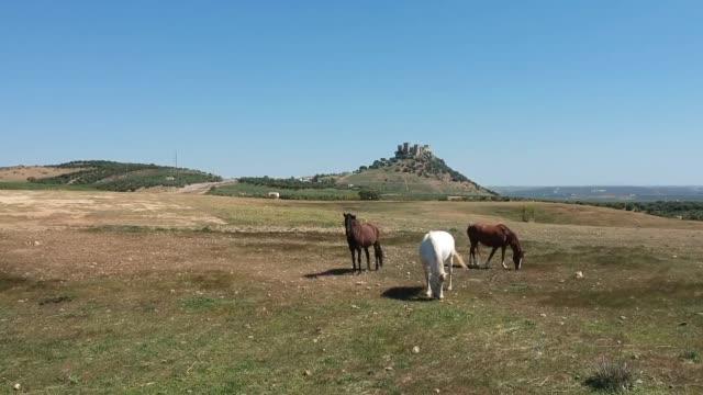 stockvideo's en b-roll-footage met three andalusian horses near almodóvar castle - vachtpatroon