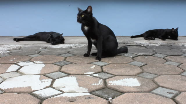 three black cat to sleep. - sideways glance stock videos & royalty-free footage