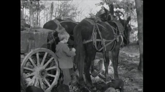three boys saddle up horses; 1961 - weg stock-videos und b-roll-filmmaterial