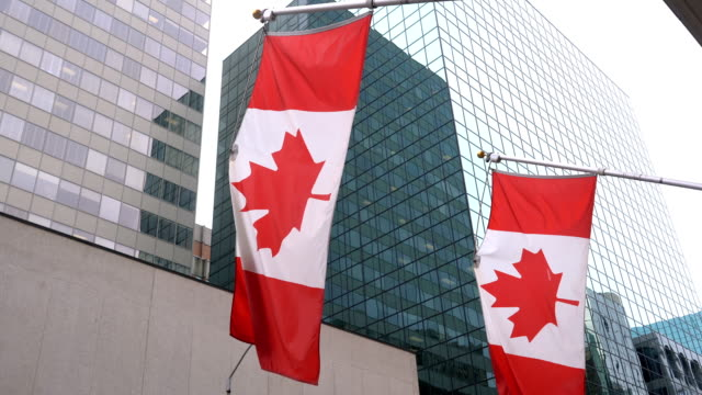three canadian flags are waving in front of glass building - bandiera del canada video stock e b–roll