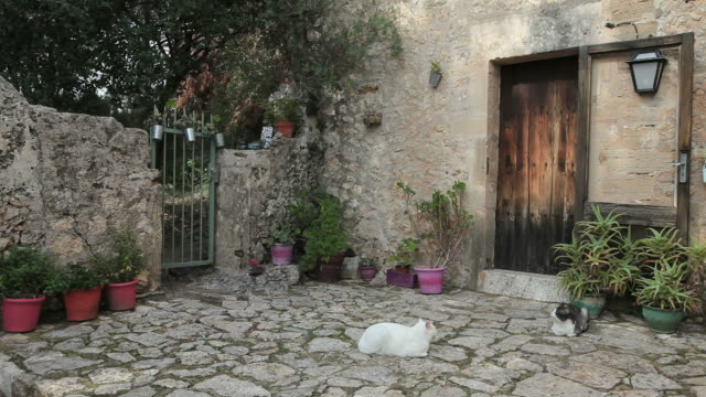 WS Three cats on  paving stone in front of house in Calvary at Pollensa / Mallorca, Balearic Islands, Spain