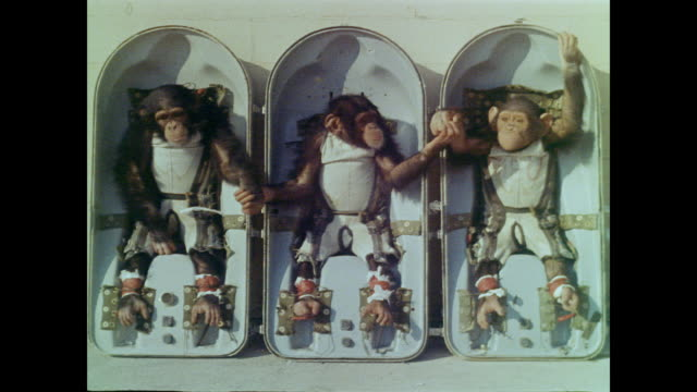 vídeos de stock, filmes e b-roll de three chimpanzees sit side by side in capsule-like seats holding hands and eating peanuts - três animais