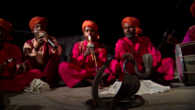 ms three colorfully dressed snake charmers playing makuti flutes, mesmerized cobras (naja naja) in foreground, delhi, india - hypnosis stock videos & royalty-free footage