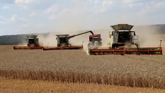three combine harvesters are harvesting a wheat field in midsummer in germany. due to the drought, the harvest seems to be bad for german farmers... - combine harvester stock videos & royalty-free footage