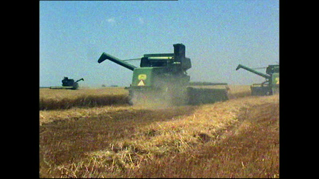stockvideo's en b-roll-footage met three combine harvesters in a crop field in kansas; 1972 - cereal plant