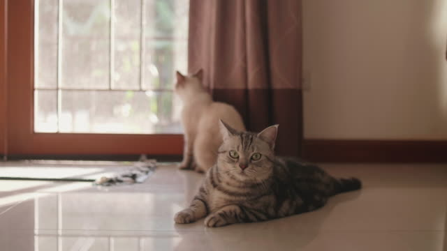 three cute cat on the floor in living room - three animals stock videos & royalty-free footage