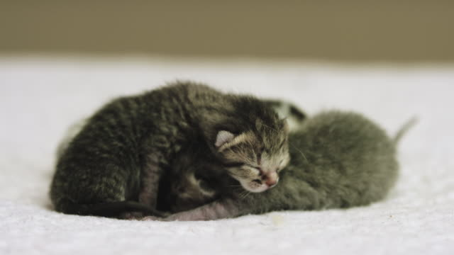 three cute little kittens - soft blanket stock videos and b-roll footage