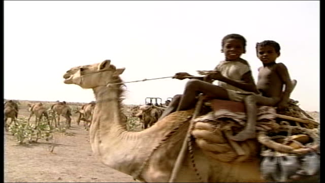 lake chad chad ext press vehicles towards past across sandy terrain press vehicle rl passing camels at roadside general view camel train of nomadic... - threshing stock videos & royalty-free footage