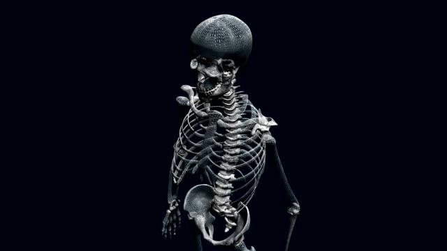 three dimensional skeleton - skeleton sled stock videos and b-roll footage