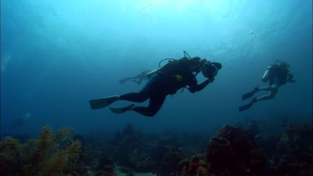 MS, LA, Three divers swimming around coral reef, Saint Lucia