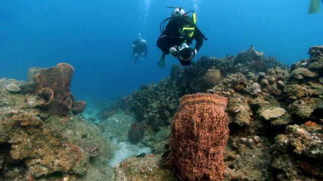 MS, Three divers swimming over coral reef, Saint Lucia, LA