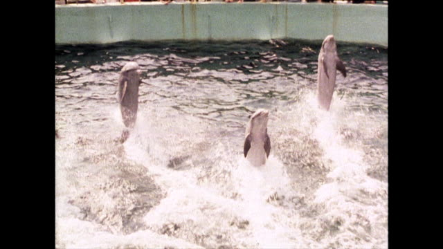 three dolphins perform in a display at miami seaquarium; 1980 - däggdjur bildbanksvideor och videomaterial från bakom kulisserna