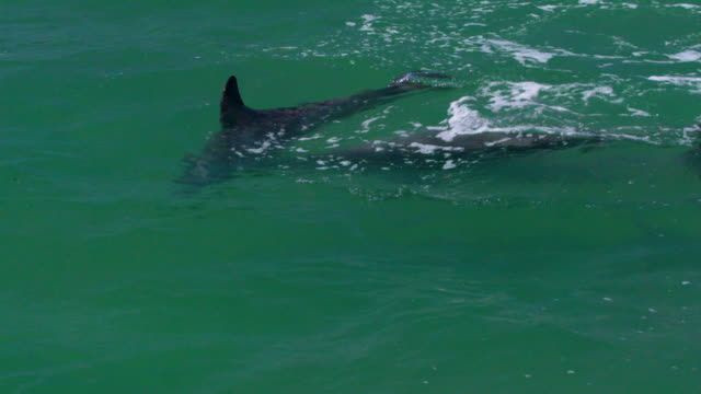 vídeos de stock, filmes e b-roll de three dolphins playing together - cetáceo