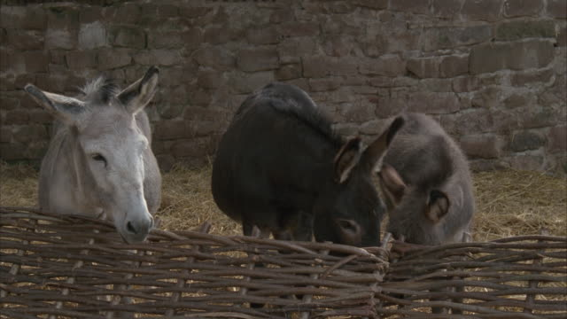 ms, three donkeys in animal pen - animal pen stock videos & royalty-free footage