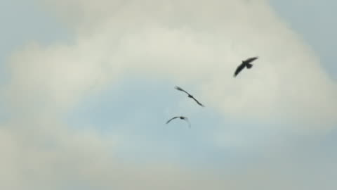 three eagles in the sky - three animals stock videos & royalty-free footage