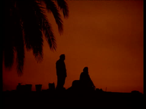 vídeos de stock, filmes e b-roll de three egyptian men silhouetted against orange sunset bend down to pray next to palm tree - ajoelhando se