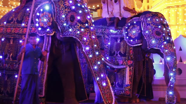 ms three elephants and mahouts performing in buddhist festival or procession 'esala perahera' in front of 'temple of tooth' audio / kandy, central province, sri lanka - sri lankan culture stock videos & royalty-free footage