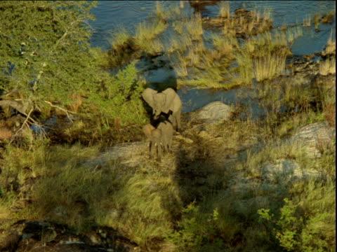 Three elephants standing on riverbank.