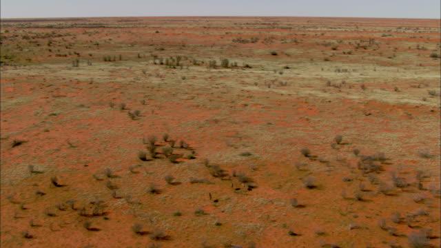 three emus run across the vast simpson desert in australia. - emu stock videos & royalty-free footage