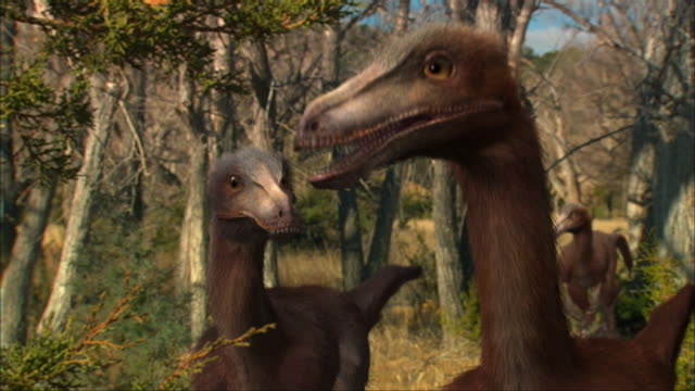 cgi, ms, three eoraptors in forest - paleozoology stock videos and b-roll footage