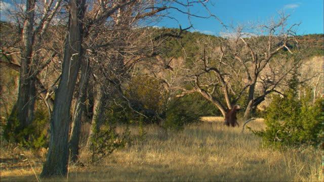 CGI, MS, Three Eoraptors walking in field