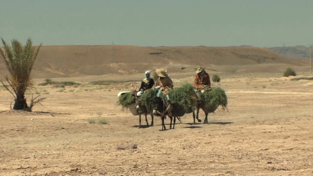 ws pan three farm workers on donkeys carrying grass, dades valley, morocco - 乗る点の映像素材/bロール