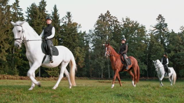 vidéos et rushes de ds trois cavaliers féminins sur une balade à cheval le matin - équitation de loisir