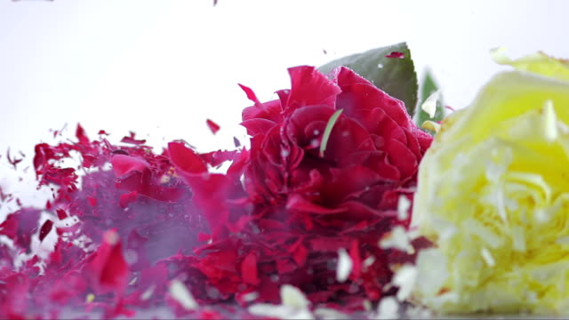 slo mo three frozen roses shattering on white surface - rose petal stock videos & royalty-free footage