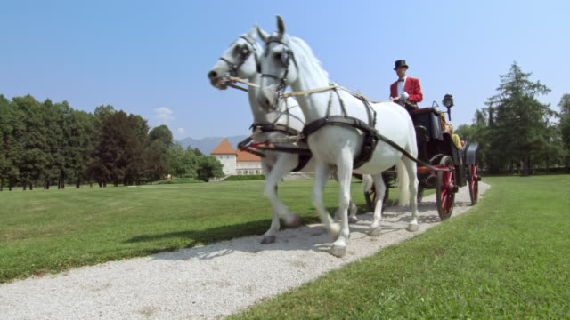 ds three generation family riding in a horse drawn carriage - top hat stock videos & royalty-free footage
