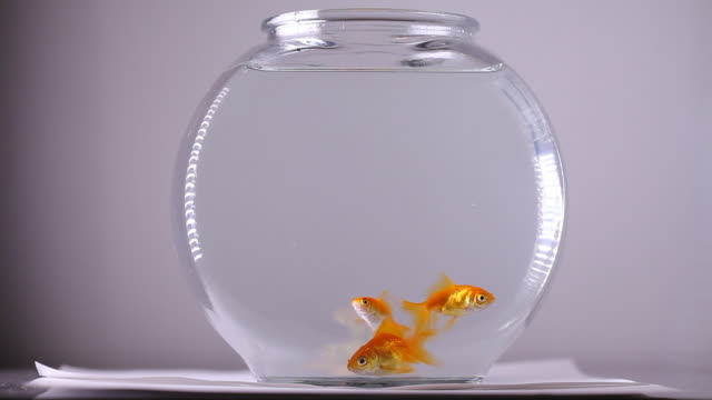 three goldfish swimming in a bowl - bowl stock videos & royalty-free footage