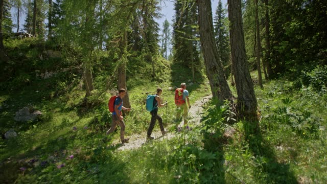 three hikers walking on a path through a mountain forest in sunshine - hiking stock videos & royalty-free footage