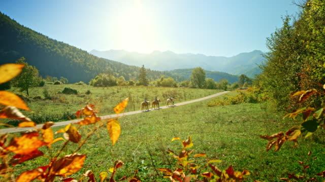 vídeos de stock e filmes b-roll de three horses being ridden in the sunny green valley - cavalgar