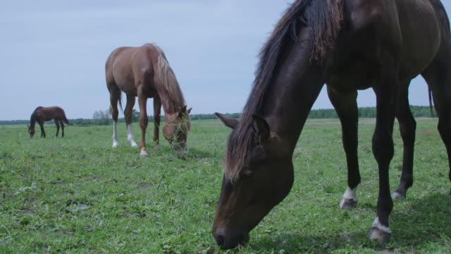vidéos et rushes de three horses grazing in field - animaux au travail