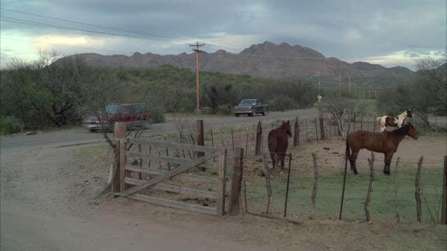 WS Three horses grazing in ranch, van passes in background