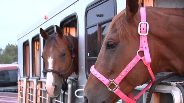 vídeos de stock e filmes b-roll de três cavalos em reboque - três animais