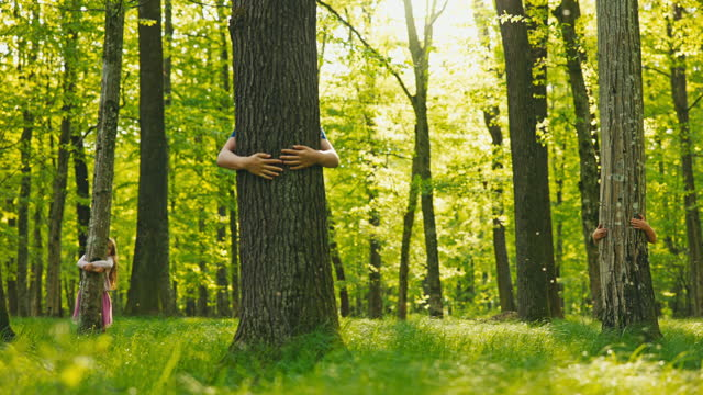 slo mo three kids hugging trees in the forest - tree hugging stock videos & royalty-free footage