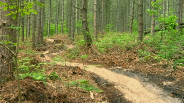 WS Three men cycling through winding wooded path in Bedgebury Forest / Kent, England, UK
