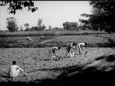 three men tilling soil field by hand using hoe ws field w/ person covered carrying overload of grain through frame ws edge of wood silhouette w/... - wood grain stock videos and b-roll footage