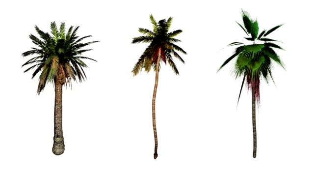 Three palm trees sway against a white background and as white on black silhouettes.