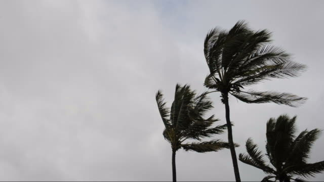 three palm trees - hurricane storm stock videos and b-roll footage