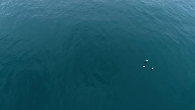 stockvideo's en b-roll-footage met three pelicans gliding over the ocean near laguna beach california - laguna beach californië