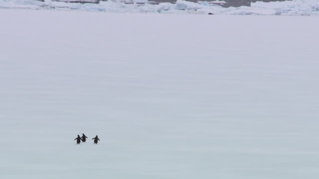 three penguins walk across snow, antarctica - polar stock videos & royalty-free footage