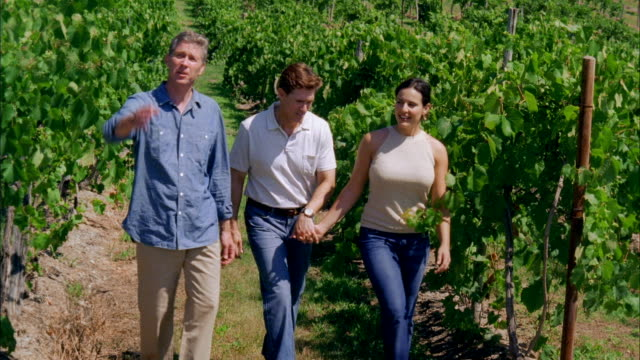 ms, three people in vineyard, marlboro, new york state, usa - marlboro new york stock videos and b-roll footage