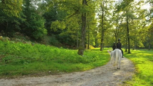 vídeos de stock e filmes b-roll de cs three people riding horses on forest road - grupo pequeno de animais